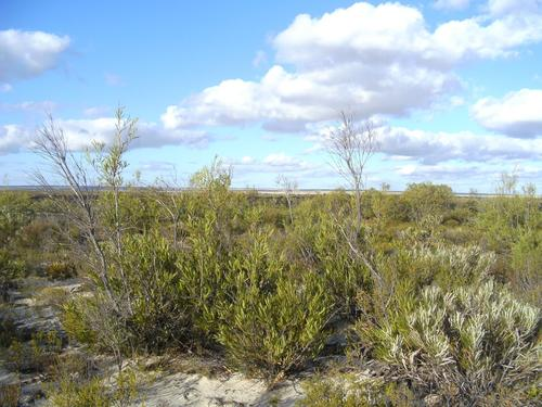 The species-rich Eneabba Sandplain shrublands